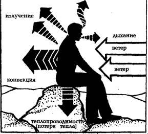 Звукоизоляция, эковата, пеноизол, потери тепла с поверхности тела
